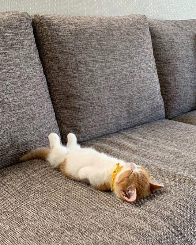 Кумедні коти, які сплять на спині: фото, які змусять усміхнутись - фото 342465