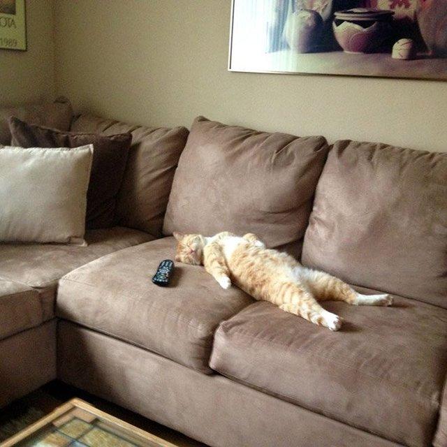 Кумедні коти, які сплять на спині: фото, які змусять усміхнутись - фото 342466