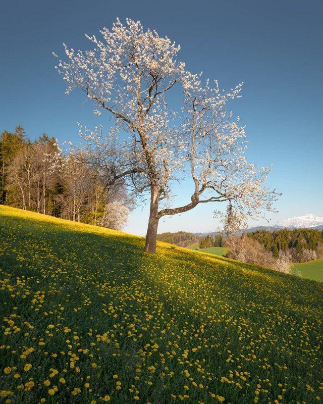 Подорож Швейцарією у різні пори року: захопливі фото - фото 343399