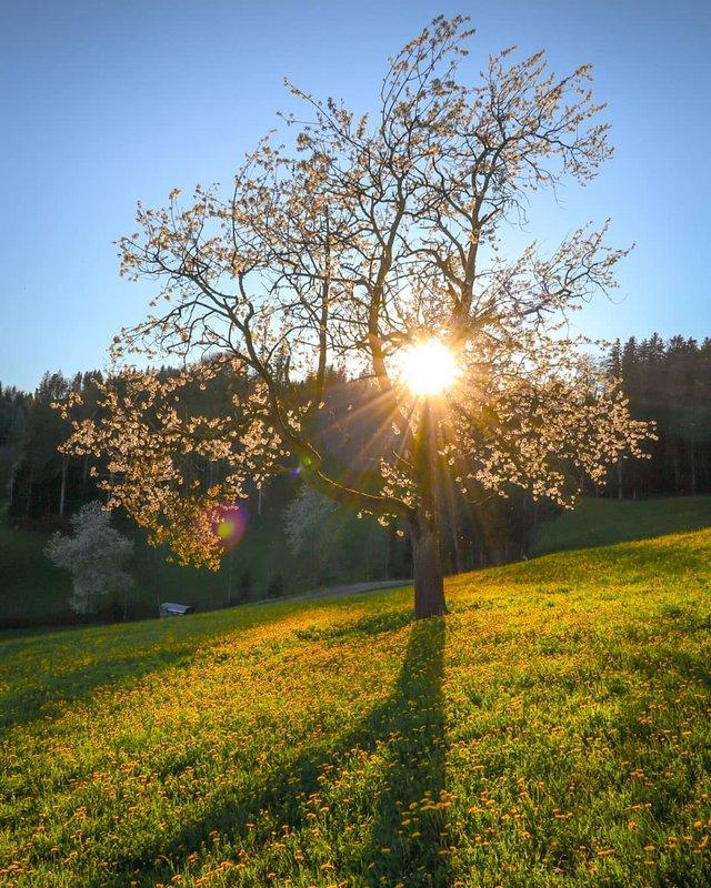 Подорож Швейцарією у різні пори року: захопливі фото - фото 343400
