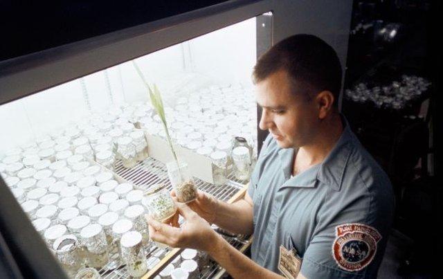 У NASA незвичайним способом перевірили місячний ґрунт: до чого тут таргани? - фото 344787