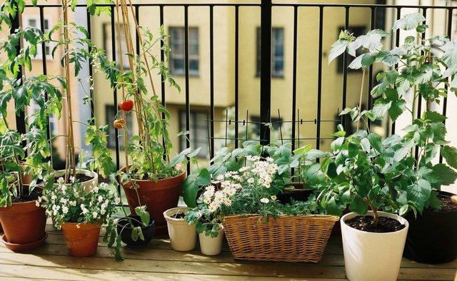 Прості способи зробити ваш балкон затишним - фото 345269