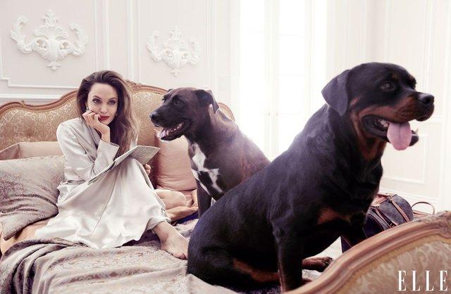 Мене б палили на вогнищі: Анджеліна Джолі вразила відвертим есе - фото 345855