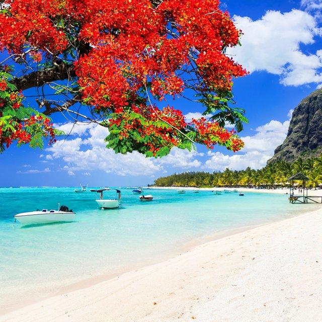 Відпочинок на морі 2019: релакс у екзотичному Маврикії - фото 345920
