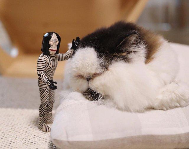 Цей кіт виглядає так, ніби теж прокинувся від будильника зранку: курйозні фото - фото 346200