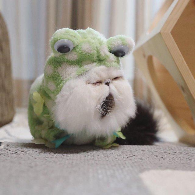 Цей кіт виглядає так, ніби теж прокинувся від будильника зранку: курйозні фото - фото 346201