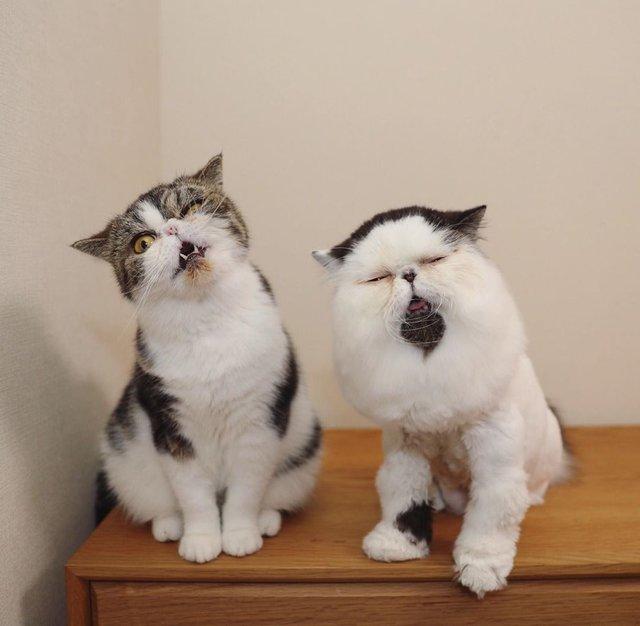Цей кіт виглядає так, ніби теж прокинувся від будильника зранку: курйозні фото - фото 346210