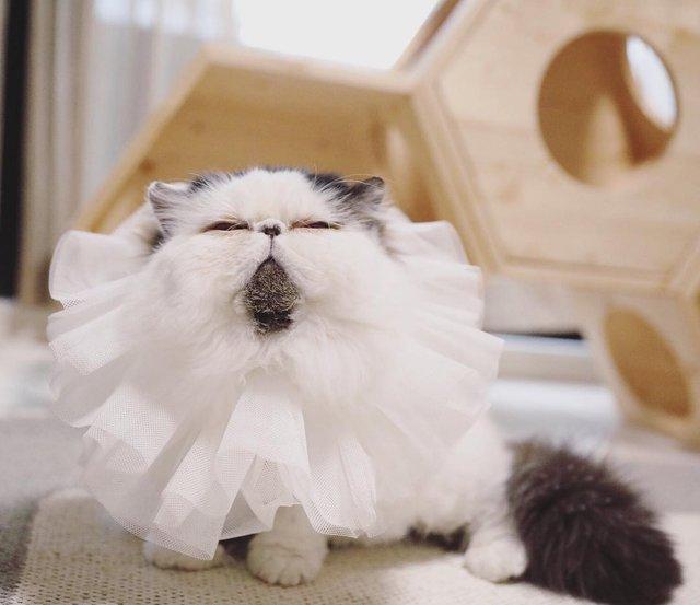 Цей кіт виглядає так, ніби теж прокинувся від будильника зранку: курйозні фото - фото 346211