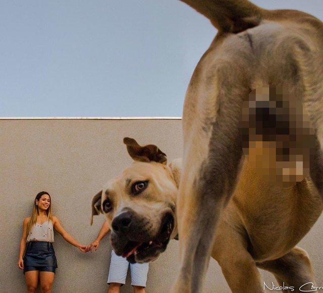 Кумедний пес зіпсував фотосесію закоханої парочки: але вийшло дуже круто! - фото 346838