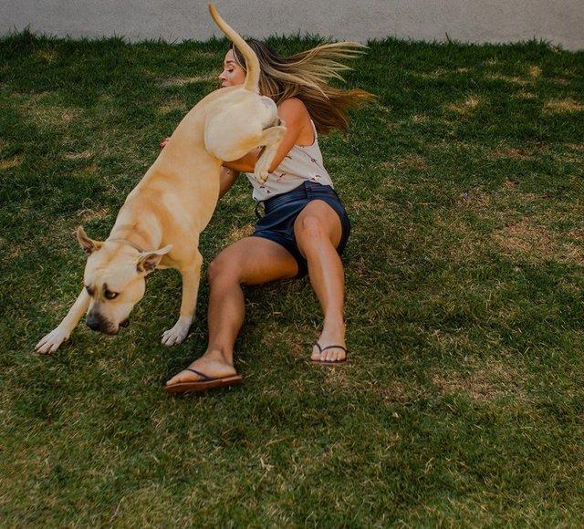 Кумедний пес зіпсував фотосесію закоханої парочки: але вийшло дуже круто! - фото 346842