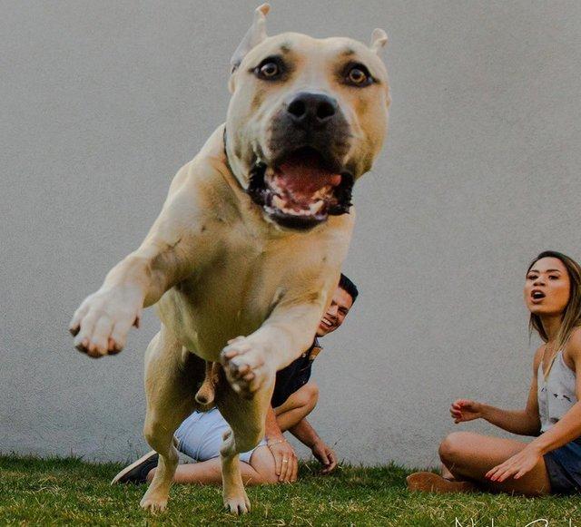Кумедний пес зіпсував фотосесію закоханої парочки: але вийшло дуже круто! - фото 346844