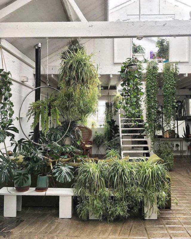 У Лондоні відкриють перший у світі готель для кімнатних рослин - фото 346884
