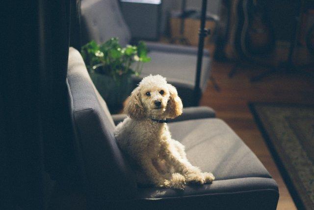 10 хвилин з тваринами допомагають справитись з емоціями - фото 347633