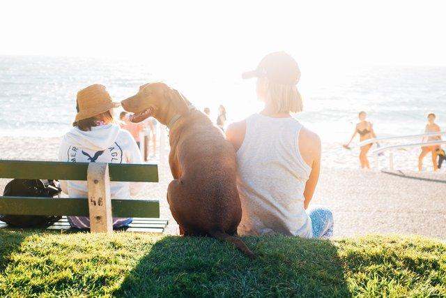 Ігри з собаками і котами знімають стрес - фото 347634