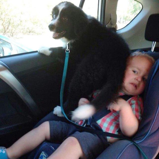 Ці собаки не знають, що таке особистий простір: кумедні фото - фото 348253
