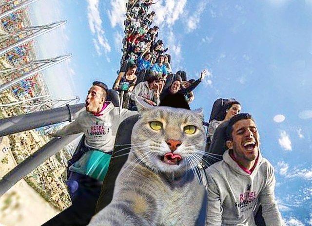 Мережа захоплюється котом, який робить ідеальні селфі - фото 348500