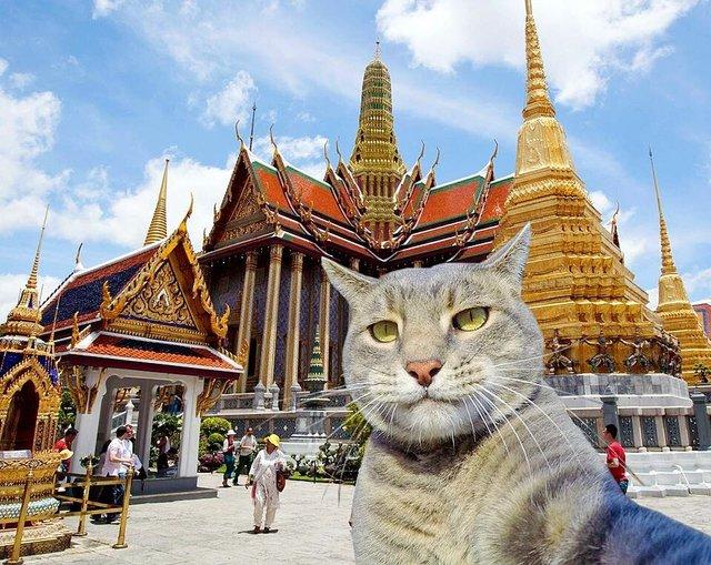 Мережа захоплюється котом, який робить ідеальні селфі - фото 348501