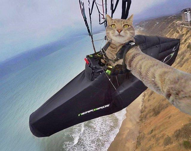 Мережа захоплюється котом, який робить ідеальні селфі - фото 348502