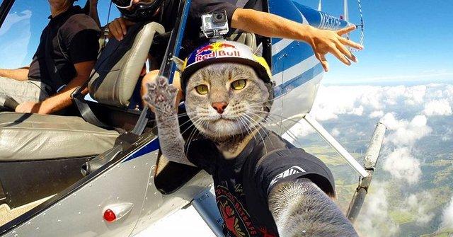 Мережа захоплюється котом, який робить ідеальні селфі - фото 348503
