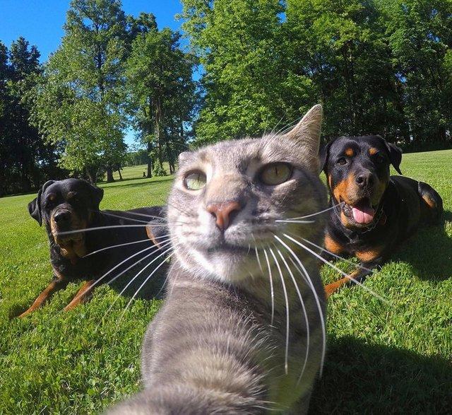 Мережа захоплюється котом, який робить ідеальні селфі - фото 348504
