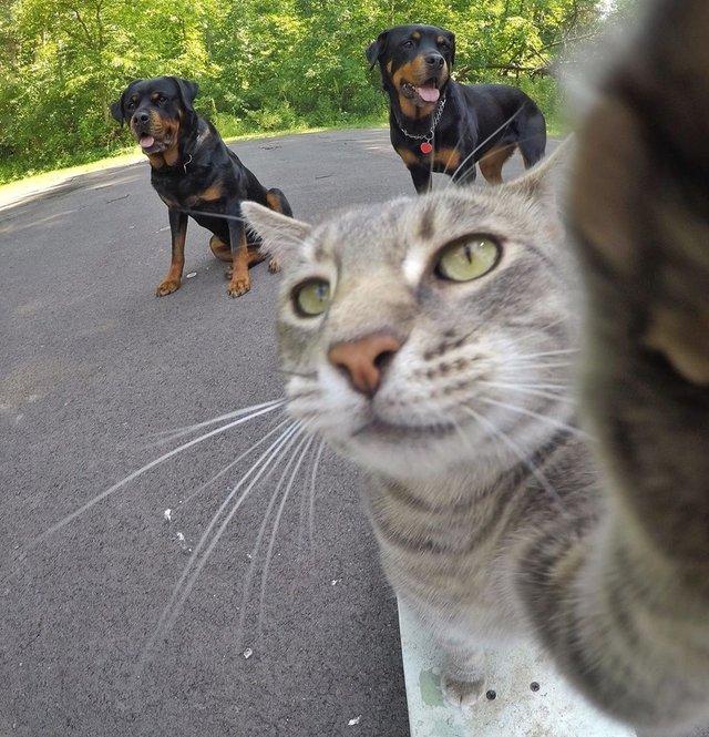 Мережа захоплюється котом, який робить ідеальні селфі - фото 348505
