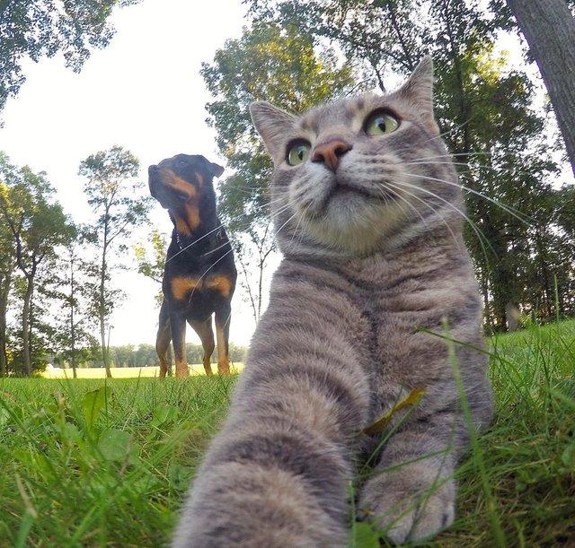 Мережа захоплюється котом, який робить ідеальні селфі - фото 348506