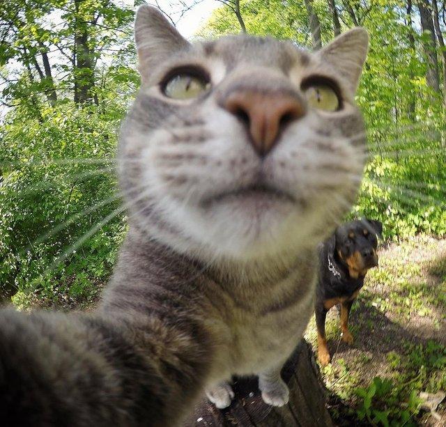 Мережа захоплюється котом, який робить ідеальні селфі - фото 348507