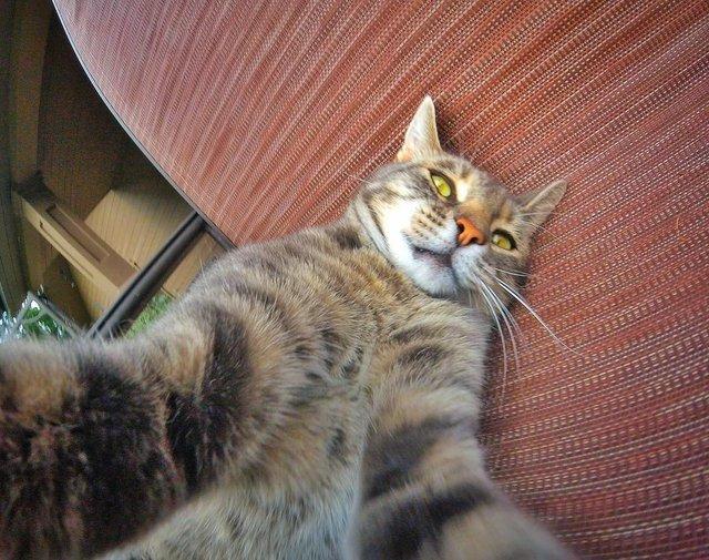 Мережа захоплюється котом, який робить ідеальні селфі - фото 348508