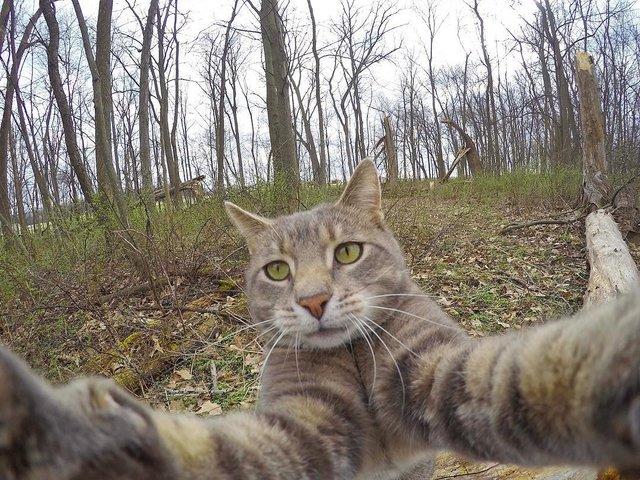 Мережа захоплюється котом, який робить ідеальні селфі - фото 348509