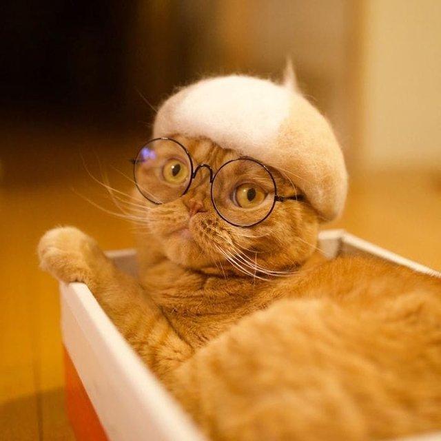 Милість зашкалює: художник створює капелюшки для котів з  їх власної вовни - фото 349096