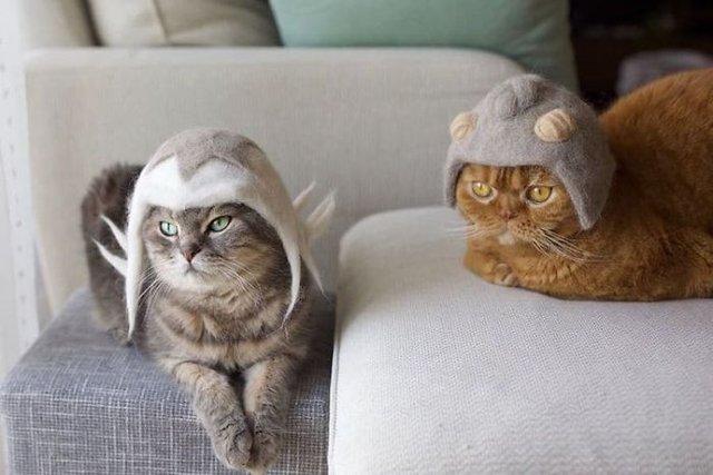Милість зашкалює: художник створює капелюшки для котів з  їх власної вовни - фото 349097