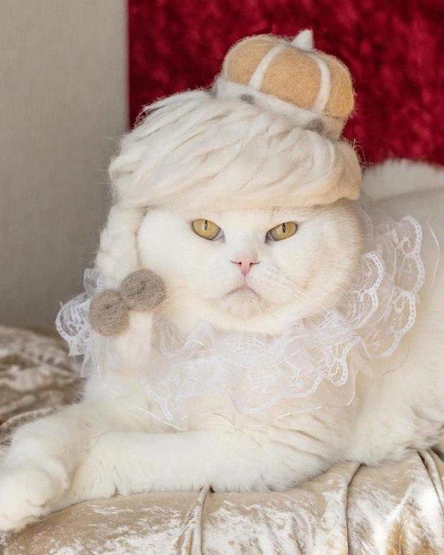 Милість зашкалює: художник створює капелюшки для котів з  їх власної вовни - фото 349100