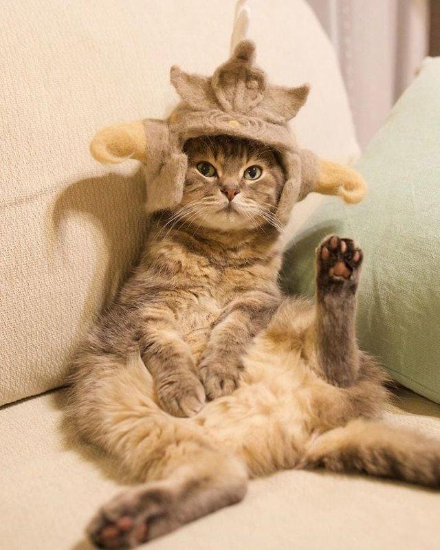 Милість зашкалює: художник створює капелюшки для котів з  їх власної вовни - фото 349101