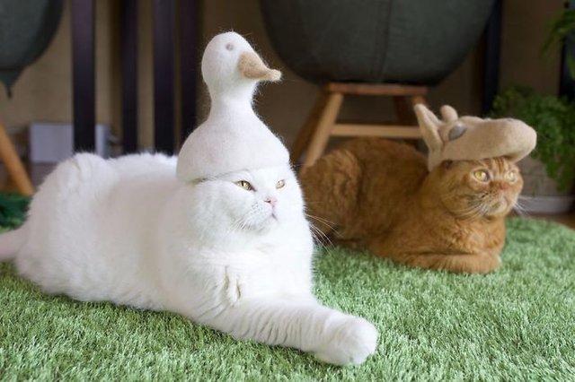 Милість зашкалює: художник створює капелюшки для котів з  їх власної вовни - фото 349102