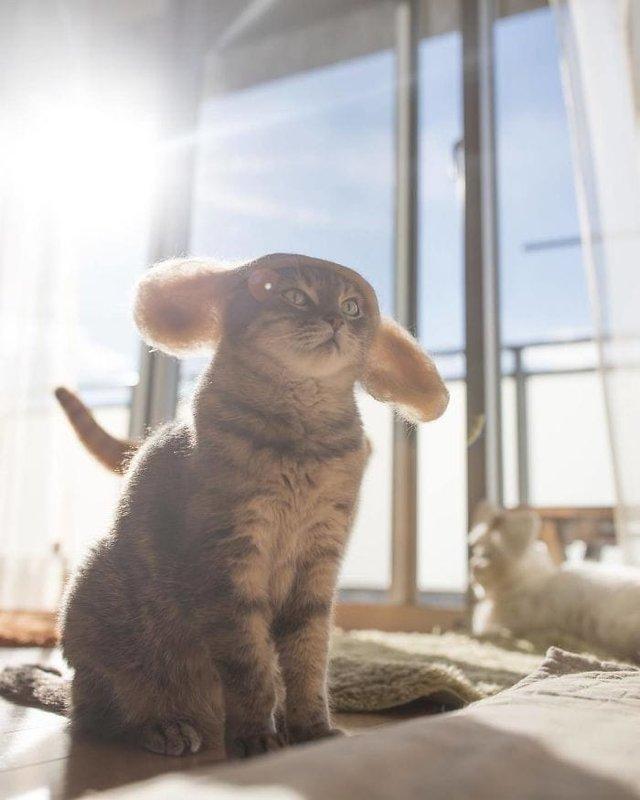 Милість зашкалює: художник створює капелюшки для котів з  їх власної вовни - фото 349103