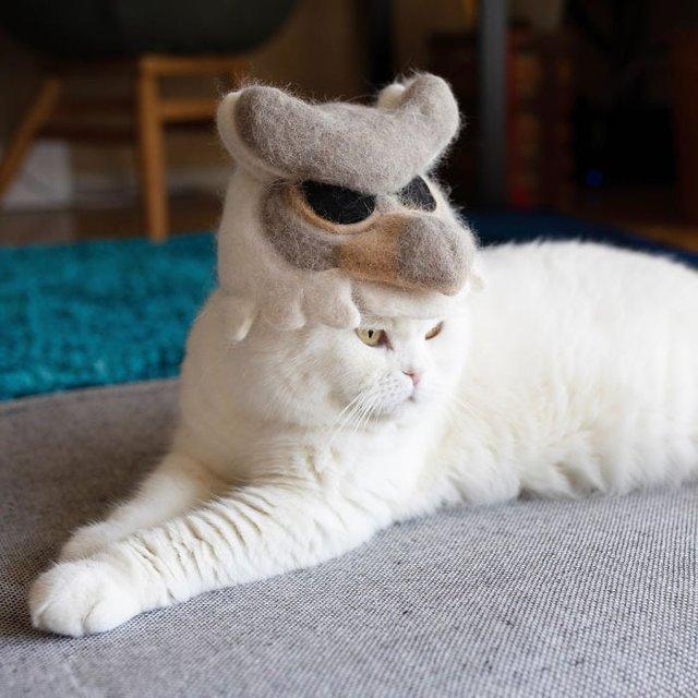 Милість зашкалює: художник створює капелюшки для котів з  їх власної вовни - фото 349104