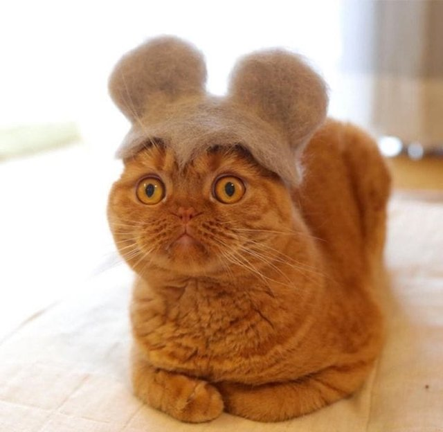 Милість зашкалює: художник створює капелюшки для котів з  їх власної вовни - фото 349105