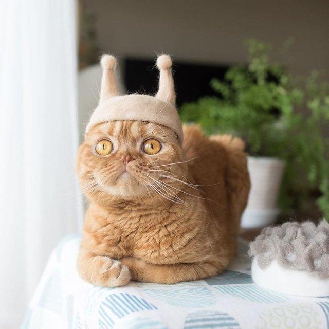 Милість зашкалює: художник створює капелюшки для котів з  їх власної вовни - фото 349107