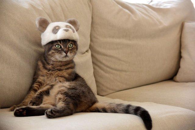 Милість зашкалює: художник створює капелюшки для котів з  їх власної вовни - фото 349108