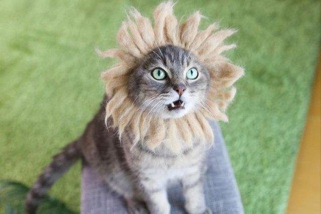 Милість зашкалює: художник створює капелюшки для котів з  їх власної вовни - фото 349109