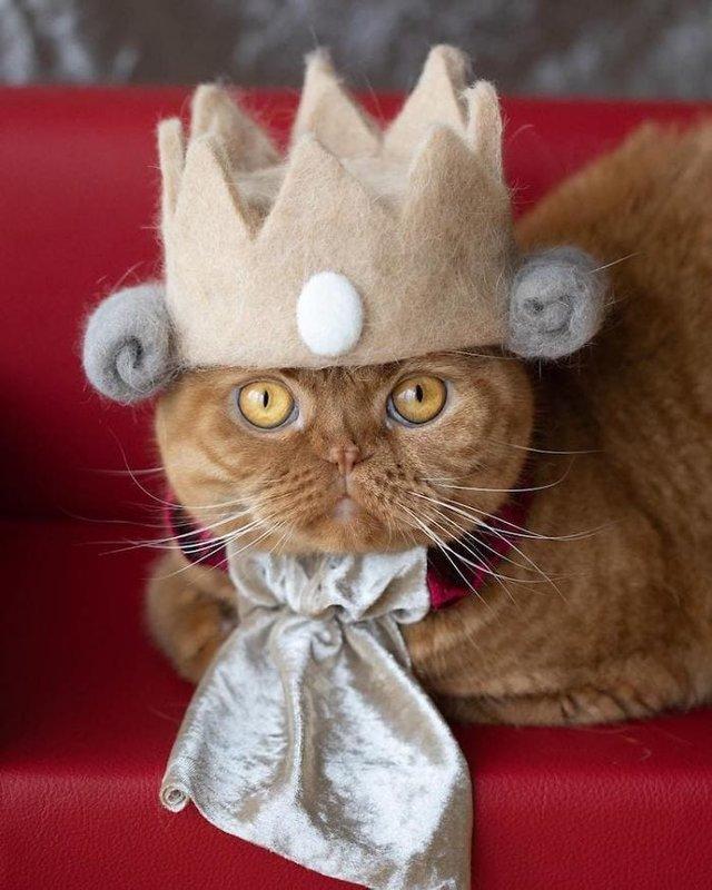 Милість зашкалює: художник створює капелюшки для котів з  їх власної вовни - фото 349110