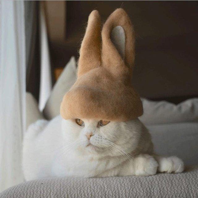 Милість зашкалює: художник створює капелюшки для котів з  їх власної вовни - фото 349111