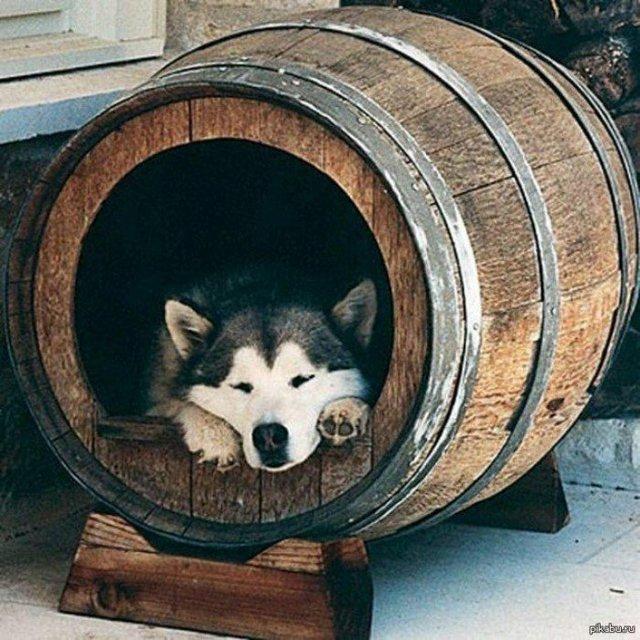 Ці будки для собак виглядають краще, ніж ваш дім - фото 349249