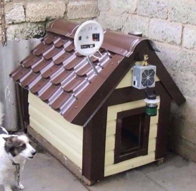 Ці будки для собак виглядають краще, ніж ваш дім - фото 349251