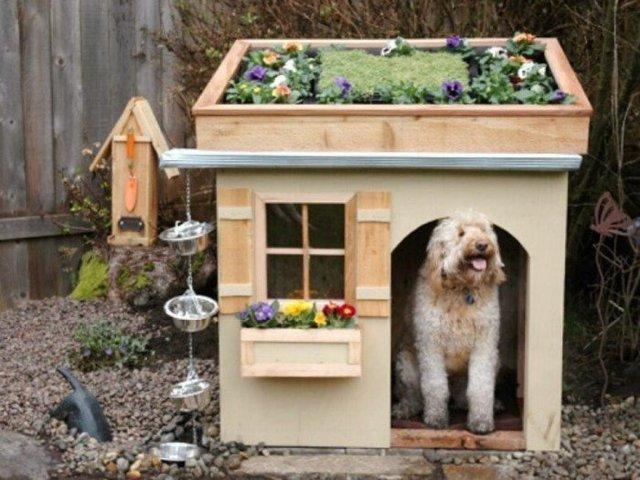 Ці будки для собак виглядають краще, ніж ваш дім - фото 349255
