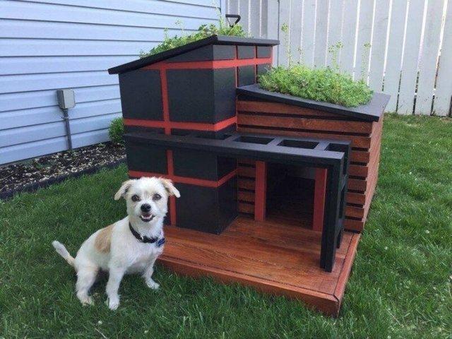 Ці будки для собак виглядають краще, ніж ваш дім - фото 349256