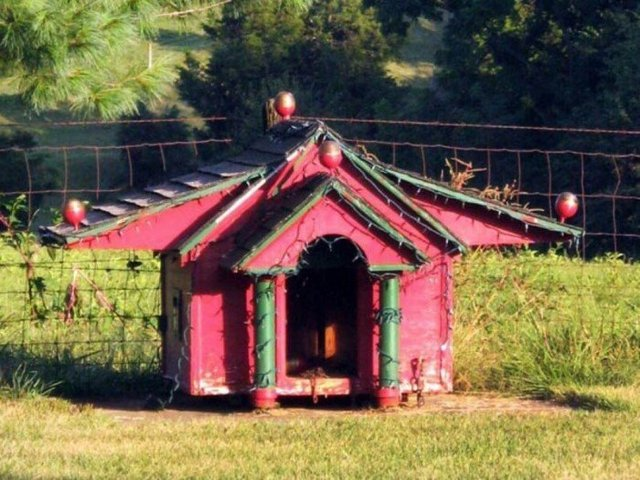 Ці будки для собак виглядають краще, ніж ваш дім - фото 349261
