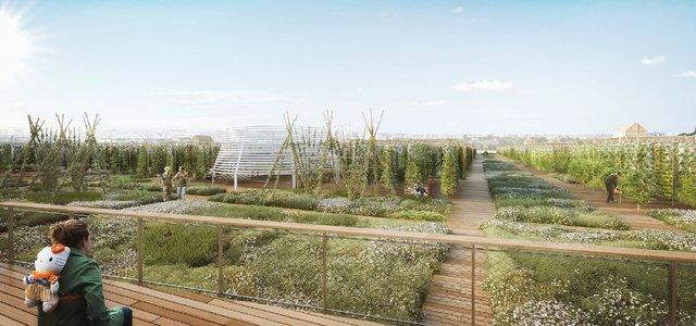 На даху однієї з будівель Парижу відкриють найбільший у світі город - фото 349709