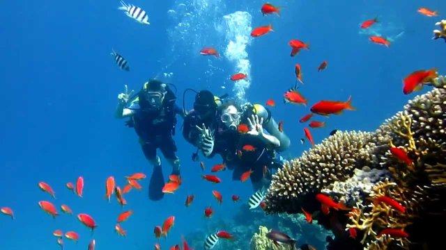 Відпочинок по-королівськи: чому варто поїхати на море в Йорданію - фото 349883