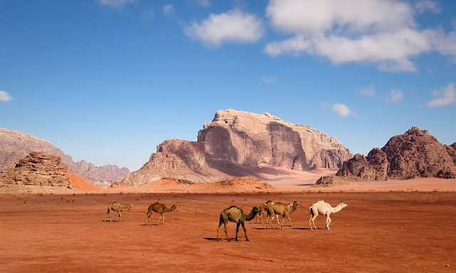 Відпочинок по-королівськи: чому варто поїхати на море в Йорданію - фото 349884